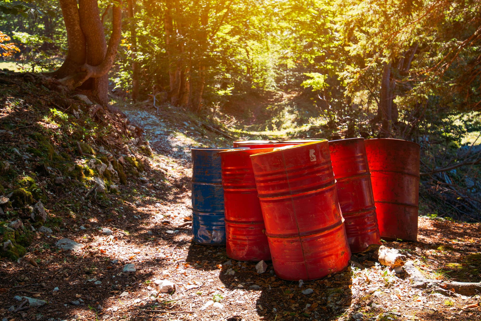 Toxic waste barrels in the forest